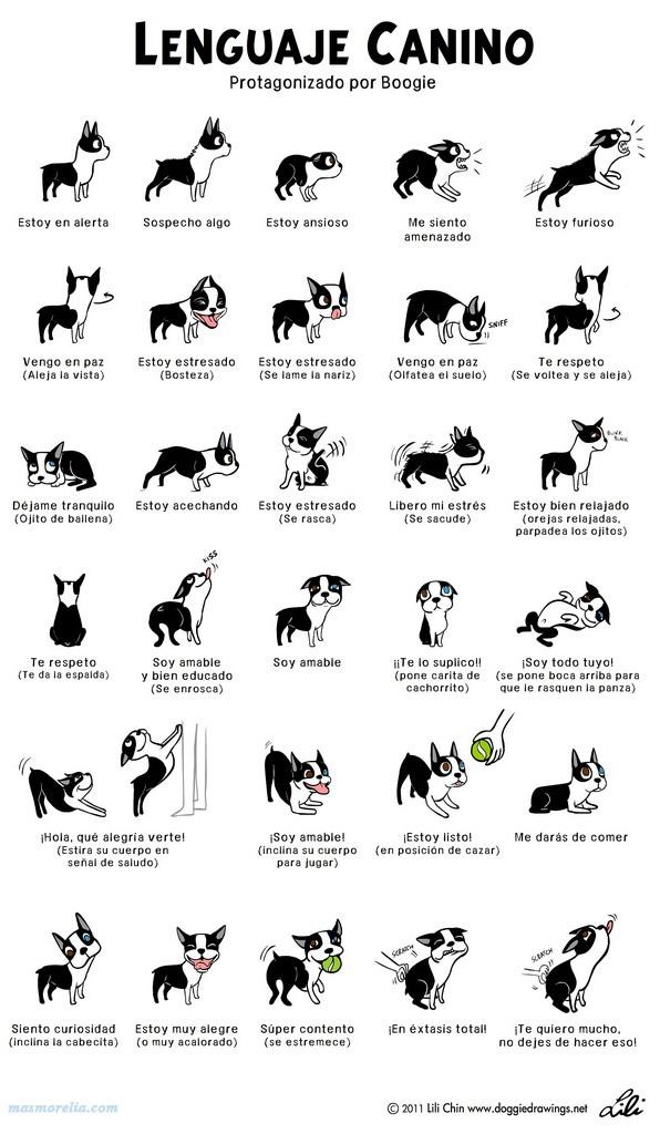 interpretacion-lenguaje-perros-infografia
